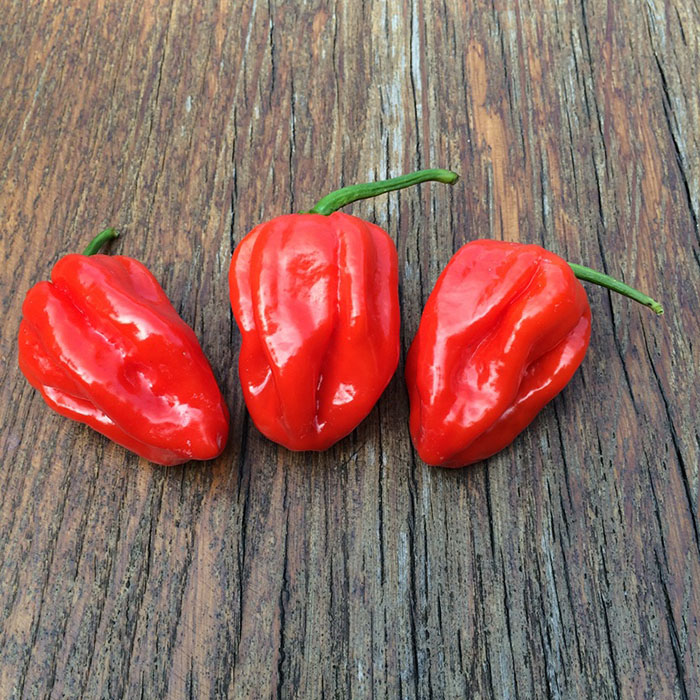 Habanero calita red_700px